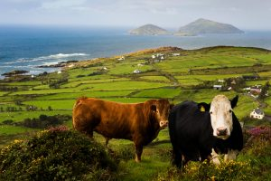 best kerry taxi, best ring of kerry tour